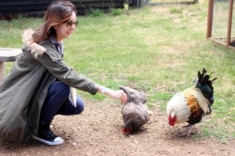 我們買了兩包飼料,就走進去。一大群雞,鴨和火雞看到我們就跟著我們走,好像知道我們有食物