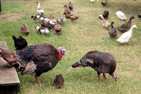 越來越多動物走過來,我們也怕怕