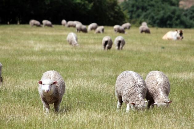 羊一見到我地就走開