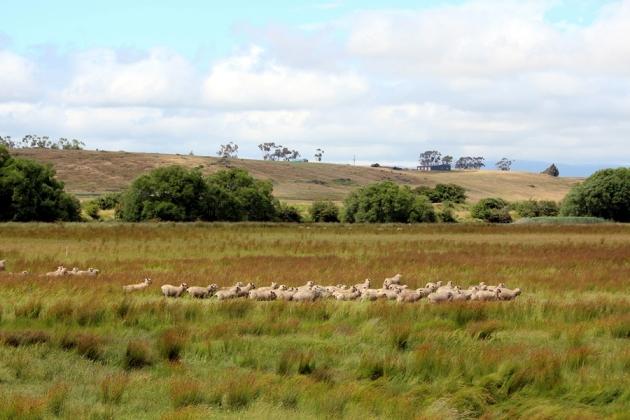 Tasmania是澳洲南面的最大島,從前是英國人放逐犯人的地方,現在最有名的是旅遊,大自然和美食。每年十二月底一月的美食節吸引很多遊客,當地也有不少農場,果園和酒莊,是想逃離城市生活的人的一個好去處。
