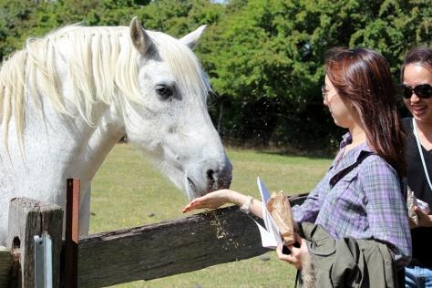 隻馬很聽話,還吃我們的飼料