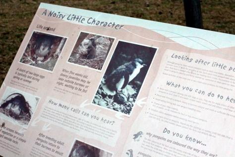 雖然不是第一次去Penguin Colony,不過企鵝這麼可愛,多看無彷