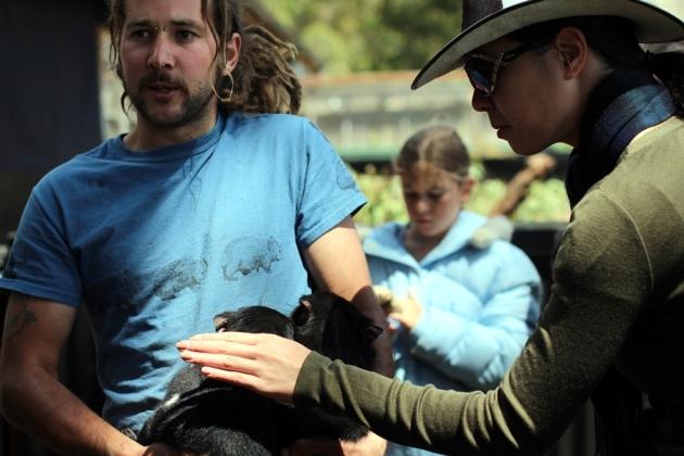 接著出場的就是Tasmania Devil,這隻可愛的動物為甚麼叫做Devil呢?
