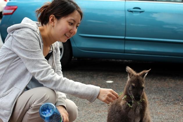 回停車場拿車時又遇到小袋鼠