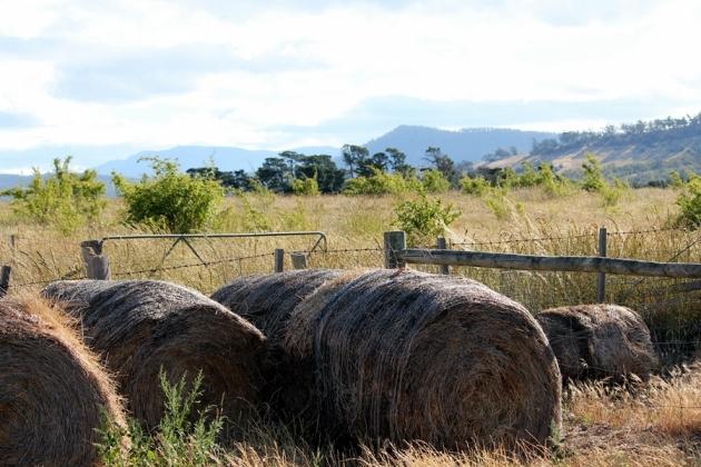 住在這裡不用砍柴,農莊主人會帶你參觀他的農莊,介紹不同的動值物