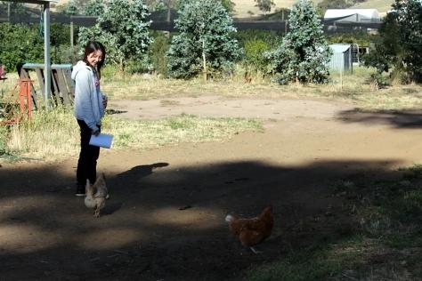 餵完食物,這些雞還跟著我們