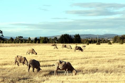 大約三時多,我們就搬到Richoomnd另一家地方住,今次是Farm Stay,我們住在一個農場裡