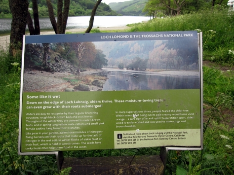 在去Glencoe途中會經過Loch Lomond National Park。