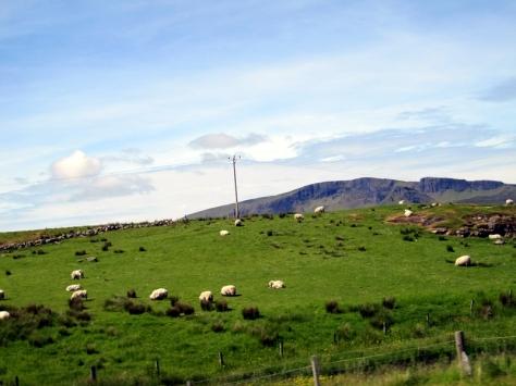 上車出發,這裡的羊活動空間比較大,沒有一大堆一大堆的